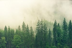Nature Forêt