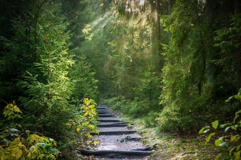 Forêt Blog spiritualité développement personnel