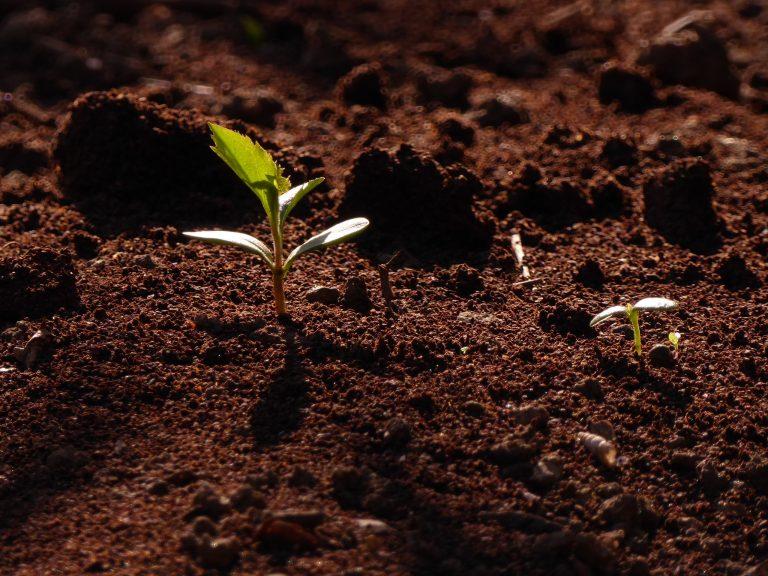 Terre Blog spiritualité développement personnel